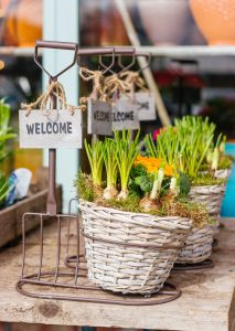 house plants with a welcome sign